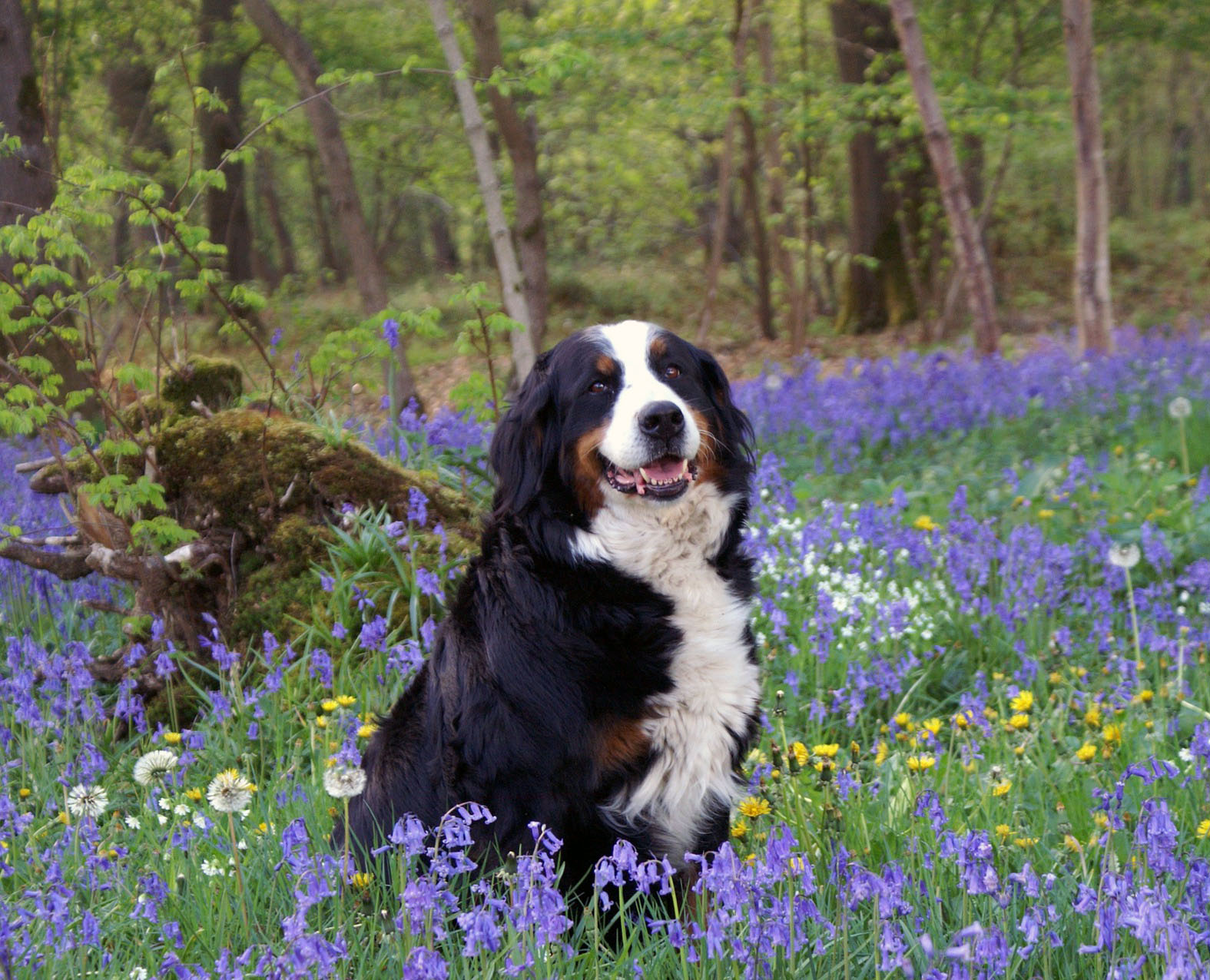 Pictures And Names Of Large Dogs