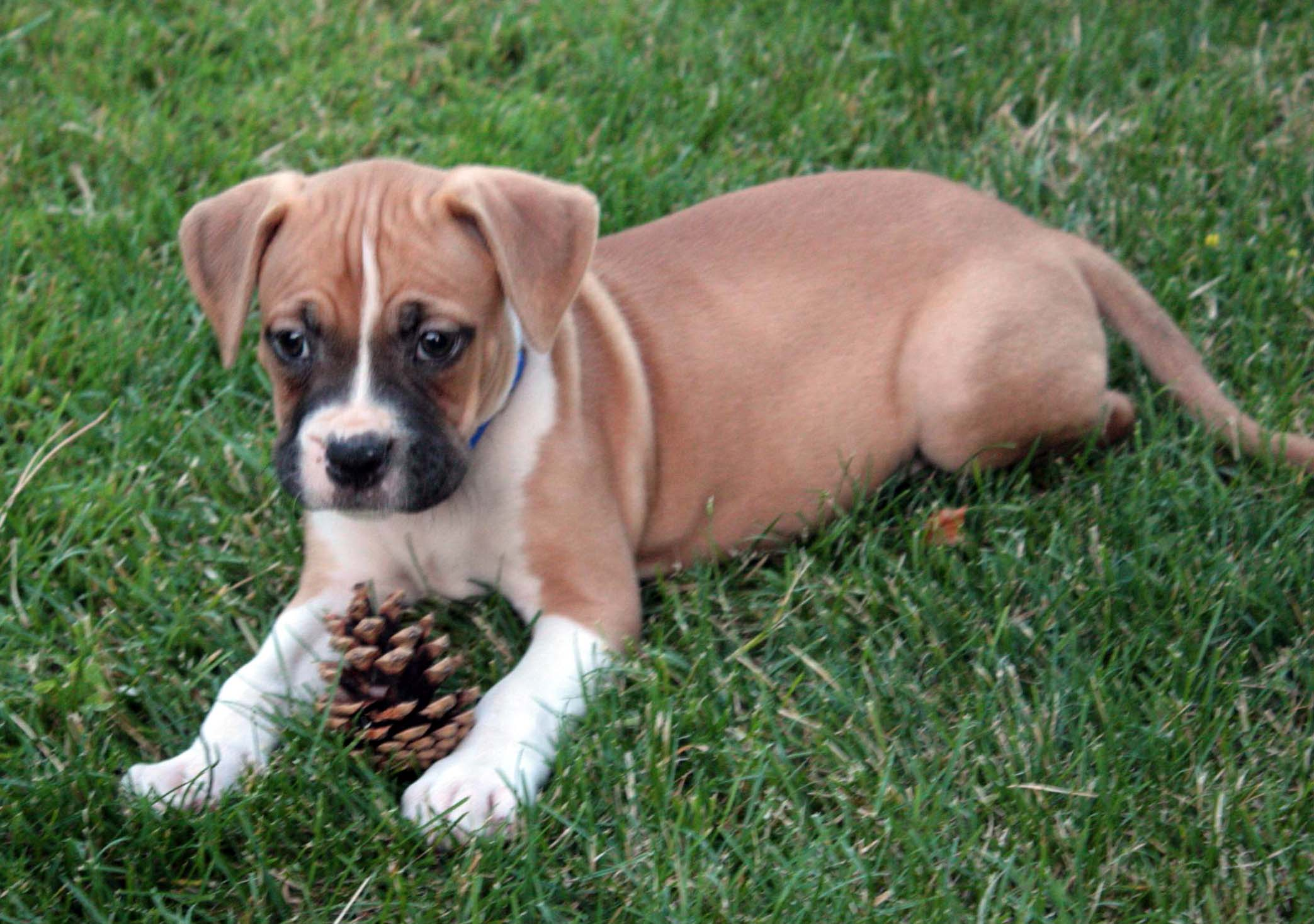 Puppy Names For Fast Dogs