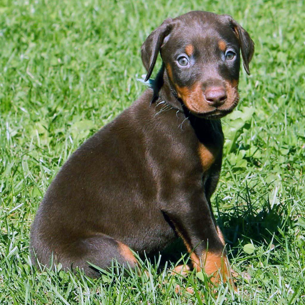 Best Outside Guard Dog