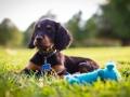 Puppy with blue squeak toy