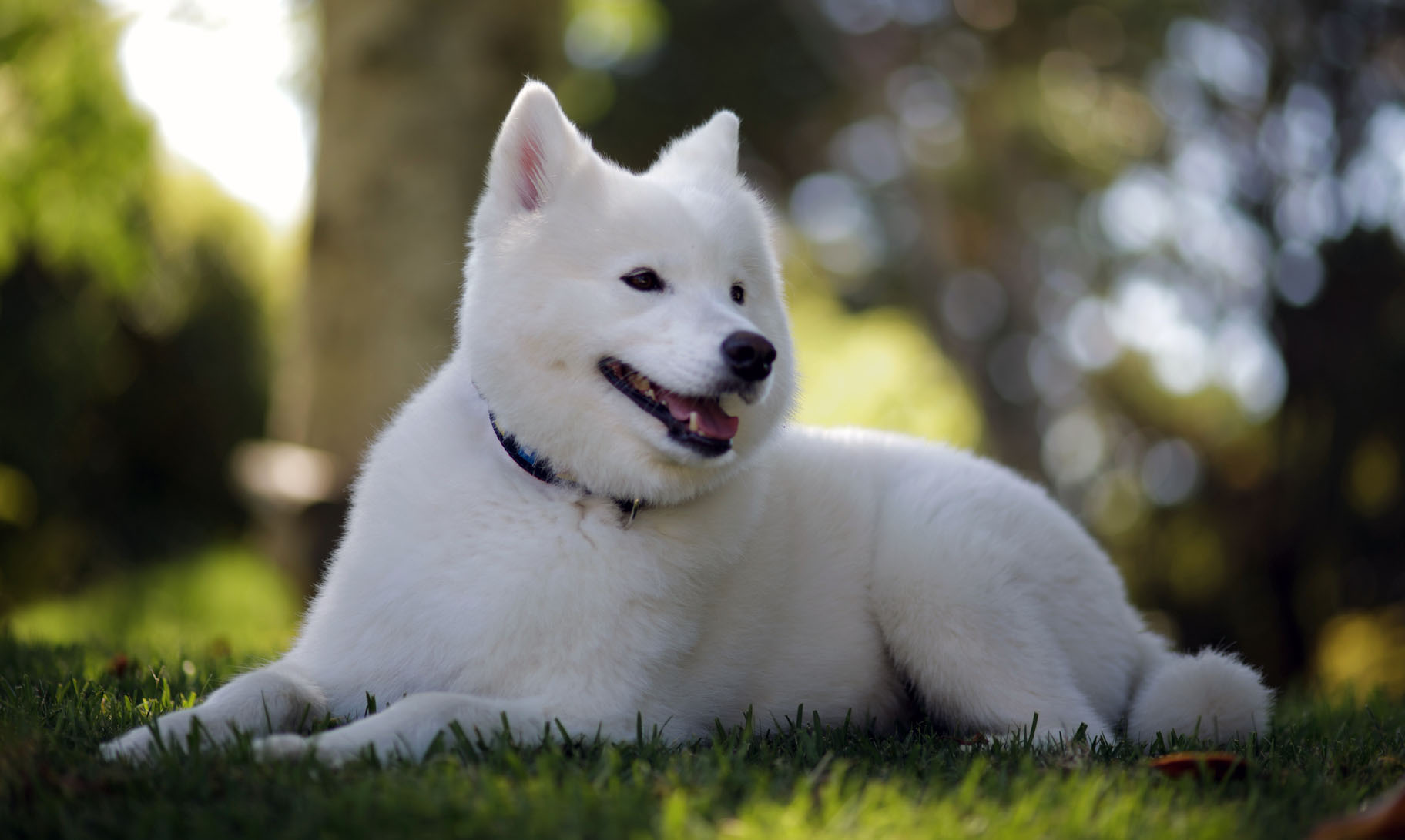 Samoyed Dog Names