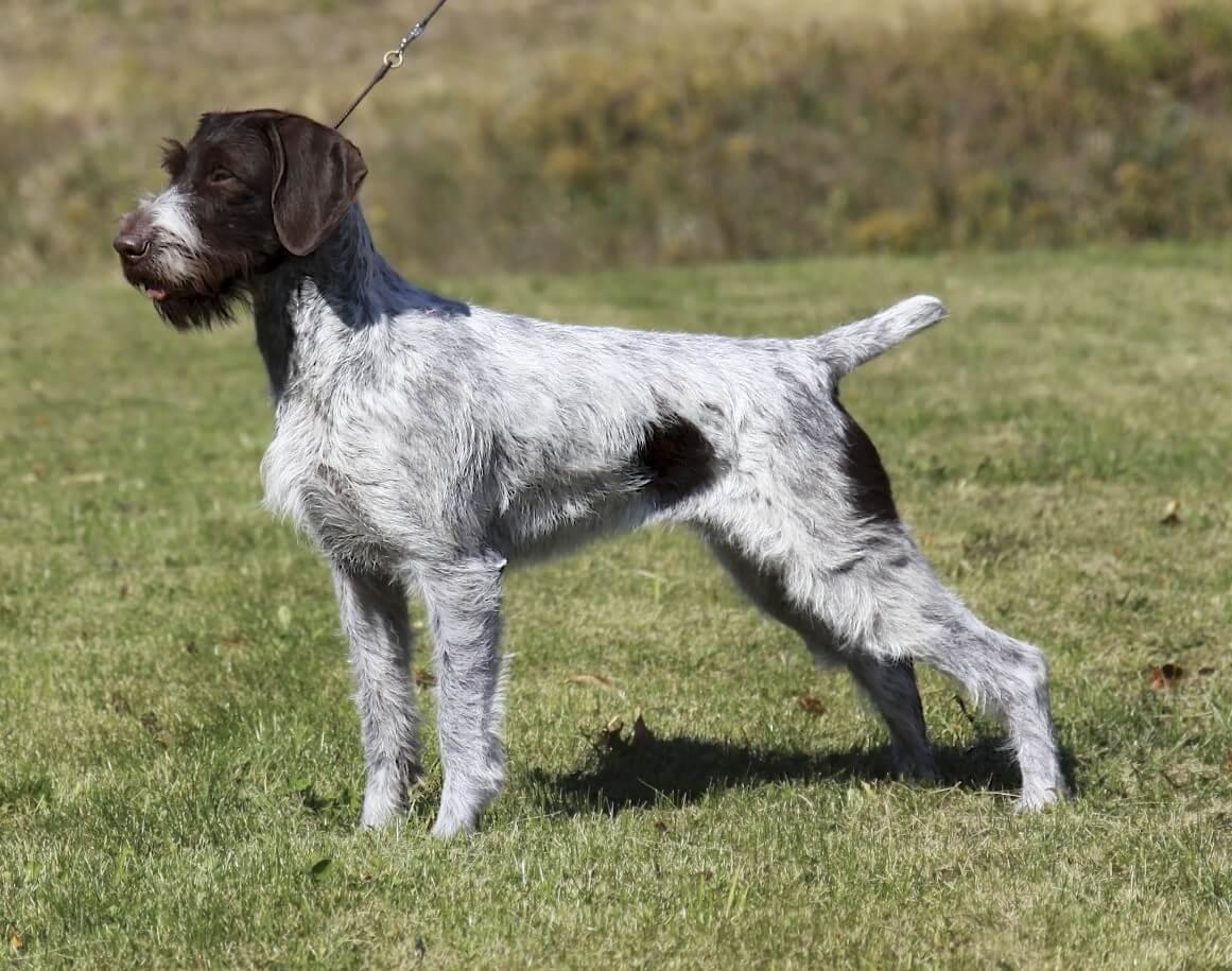 Water Dog Breeds List