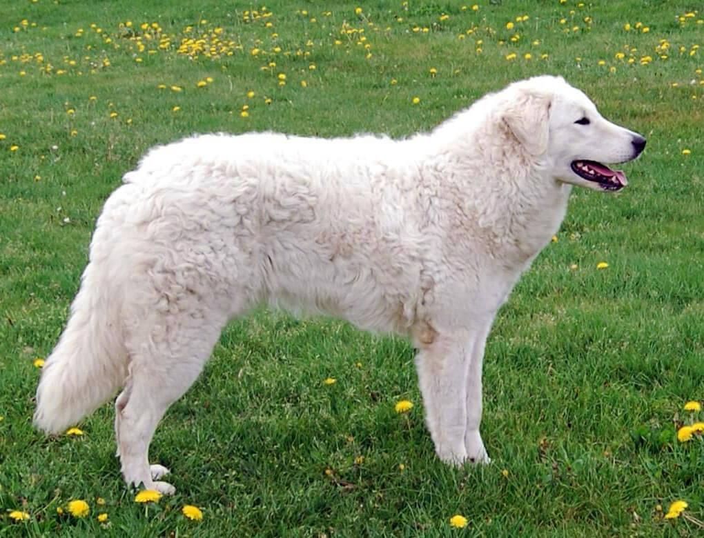 Big Big Dog Breeds